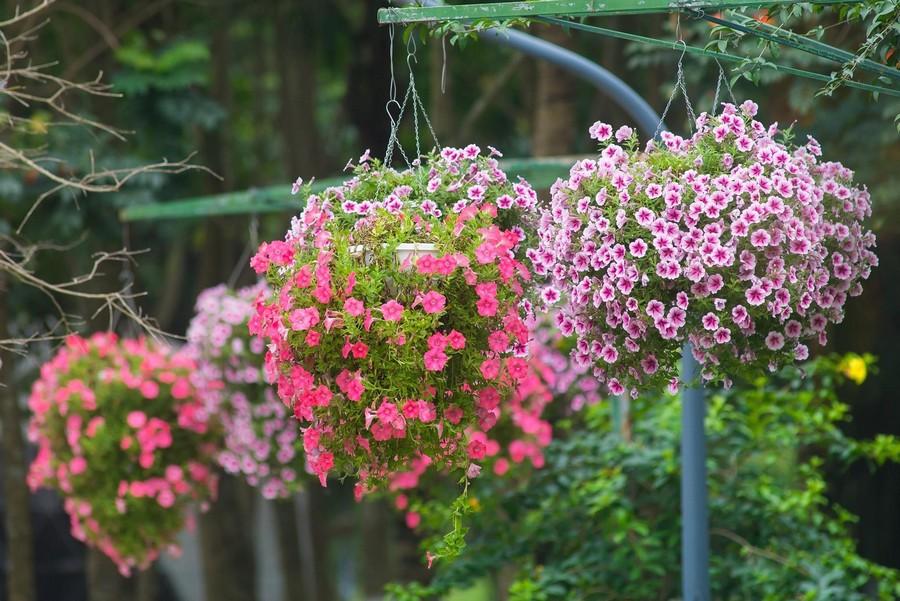 hoa nở bốn mùa tại công viên ecopark
